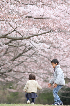 first year student: Japanese brother and sister (6 years old boy and 1 year old girl) and cherry blossoms