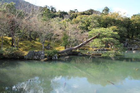 karesansui: Sogen pond garden of Tenryu ji in Kyoto, Japan