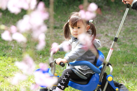 Japanese girl riding on the tricycle (2 years old) and cherry blossoms Stock Photo