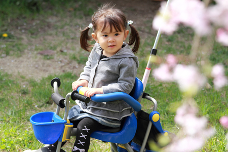 three wheeler: Japanese girl riding on the tricycle (2 years old) and cherry blossoms Stock Photo