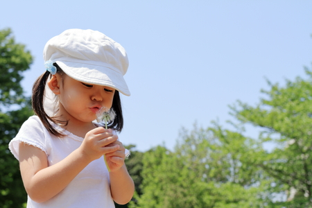 Japanese girl blowing dandelion seeds under the blue sky (3 years old)