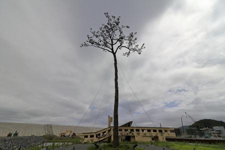 miracle pine in Rikuzentakata, Iwate, Japan