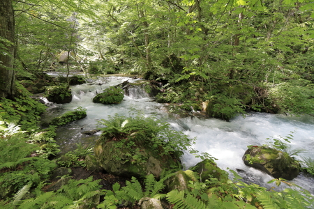 Manryo current of Oirase mountain stream in Aomori, Japan 写真素材