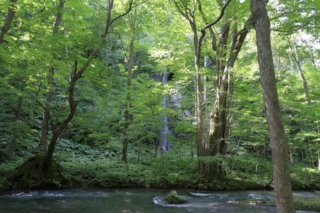 Shiraito falls of Oirase mountain stream in Aomori, Japan