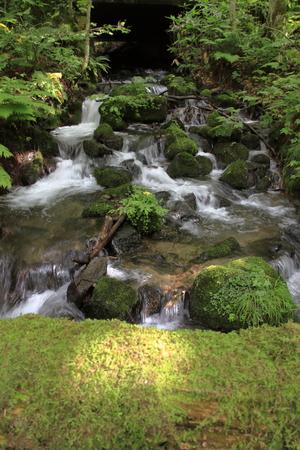 Oirase mountain stream in Towada, Aomori, Japan