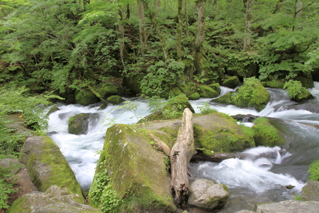 Ashura current of Oirase mountain stream in Aomori, Japan