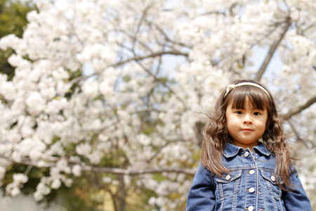 Japanese girl and cherry blossoms (4 years old)