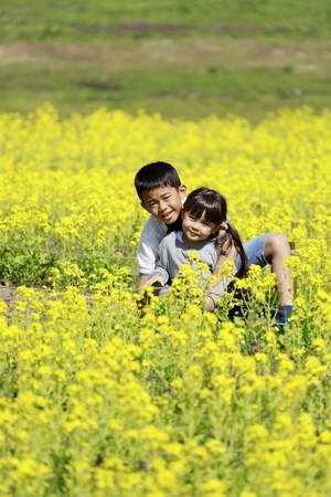 Japanese brother and sister and field mustard (9 years old boy and 4 years old girl) Imagens - 124940701