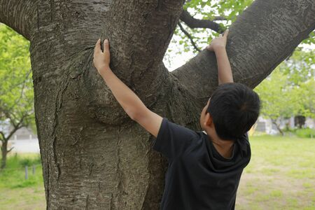 Japanese boy climbing the tree (fifth grade at elementary school)