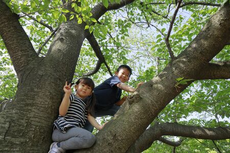 Japanese brother and sister climbing the tree (10 years old boy and 5 years old girl)