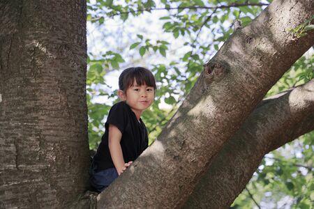Japanese girl climbing the tree (5 years old) Stok Fotoğraf