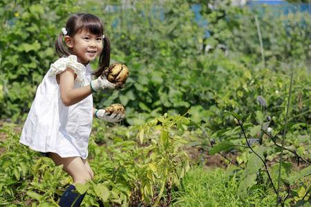 Japanese girl digging potato (5 years old)