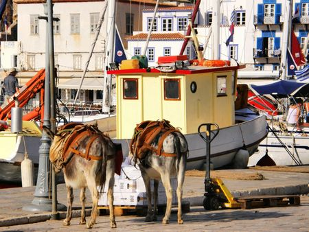 house donkey: a couple of donkeys taking a break on the sunny docks of Ydra, in Greece