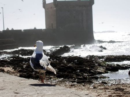 a bird is walking on a fortification wall on the seashore