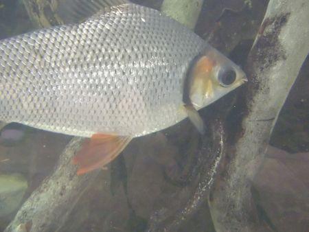 가지를 빠는 연못에있는 물고기