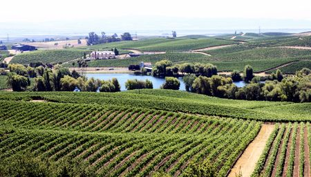 landscape of vineyards in Napa Valley Stock Photo - 5322405
