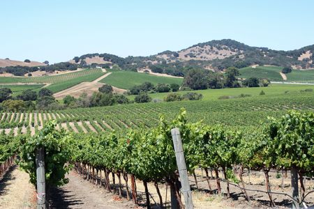 napa valley: beautiful vineyard in Napa Valley, California Stock Photo