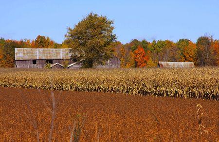 pld barm in corn field in the fall season photo