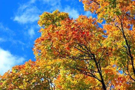 colorful orangy trees with sky as background