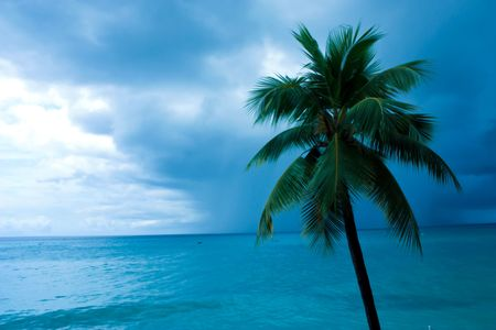 green palm tree facing the blue ocean