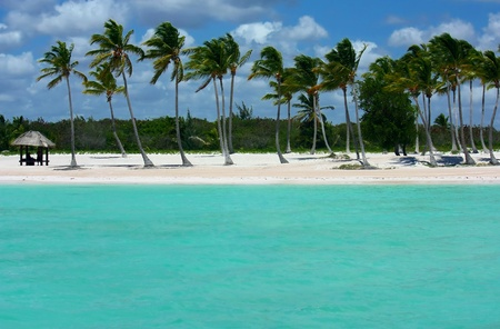 beautiful white sand beach in the Caribbeans photo