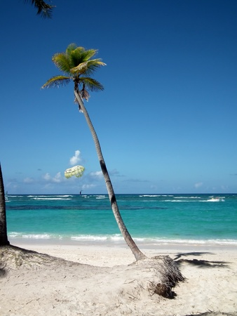 bended palm tree on pristine beach photo