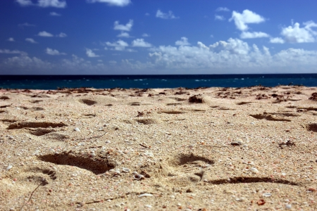 caribbeans: Pink sand beach in the Caribbeans