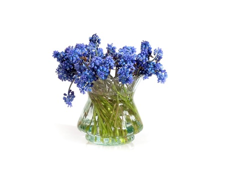 Bouquet of blossoming muscari isolated on white background Banco de Imagens