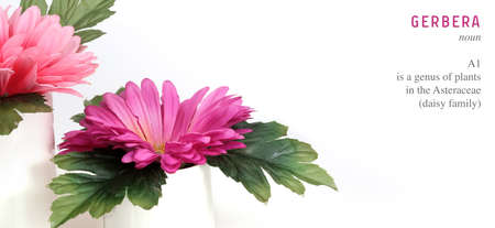 Pink gerbera flower in a small white vase isolated on white background 写真素材