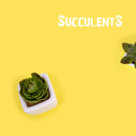 Botanical copy of succulents isolated on yellow background 免版税图像