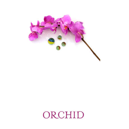 Beautiful orchid isolated on a white background (negative space) Foto de archivo