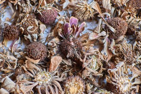 image dried flowers laid out on a table