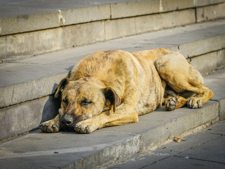 homeless brown dog lays on the gray stone stairs