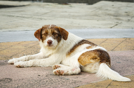 homeless colorful dog lays in the sand on the beach
