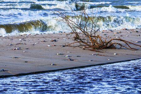 Baltic Sea coast, small river mouth into the sea