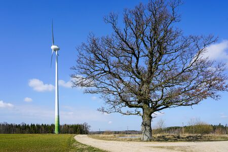 wind generator and large old oak without leaves, nature against the industry on a blue sky background