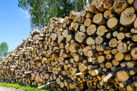 deforestation area, stack of cutted trees ready for transportation, timber harvesting