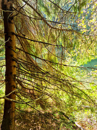 beautiful mixed tree forest in spring with bright sun shining through the trees