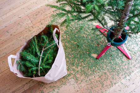 Christmas tree dried up after the Holiday Season with sawn branches and pine needles all over the floor