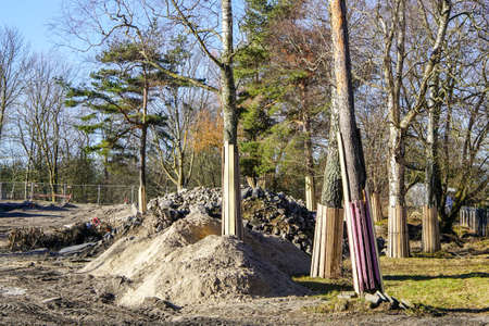 Tree trunks on a construction site covered with wooden boards to protect them from damage