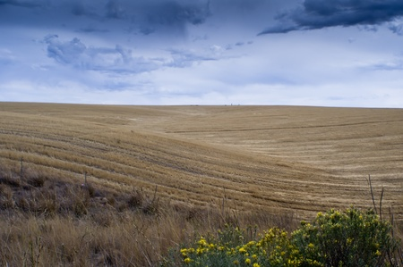 Wheat fields harvested with a storm approaching