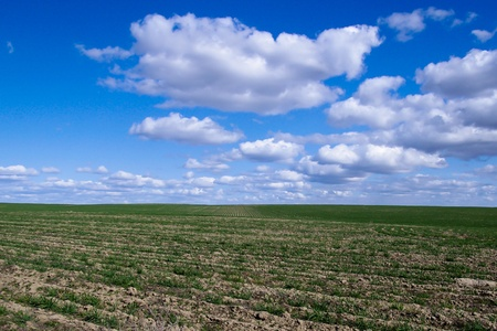 recently: Fields recently planted with grain just coming up in green rows