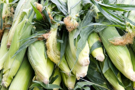 Fresh picked sweet corn on display at the farmer Imagens