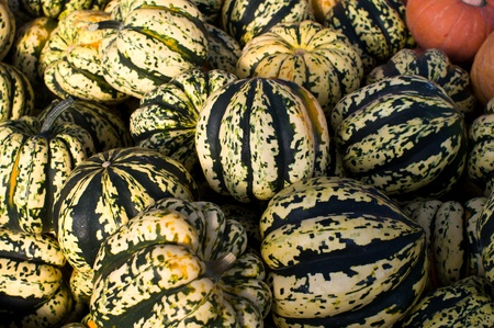 Winter squash on display at the farmers market
