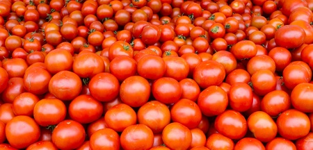 Freshly harvested tomatoes on display at the farmers market