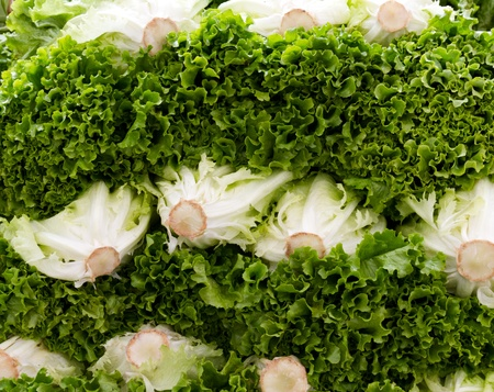 Fresh picked green leaf lettuce on display at the farmers market Imagens
