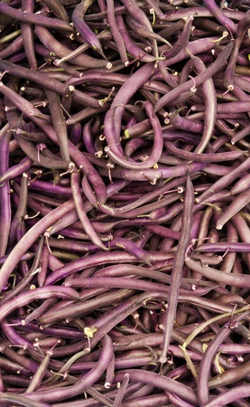snap bean: Frshly harvested purple string snap beans on display at the farmers market