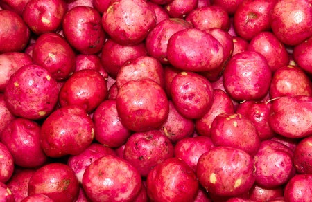 Freshly harvested red potatoes on display at the farmer