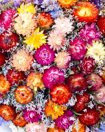 flores secas: Colorido ramo de flores secas