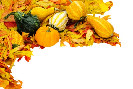 Corner border with fall leaves and decorative gourds isolated on white Stock Photo - 10613699